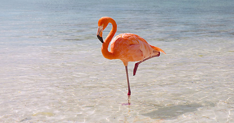 flamingo_dreamstime_m_29016097